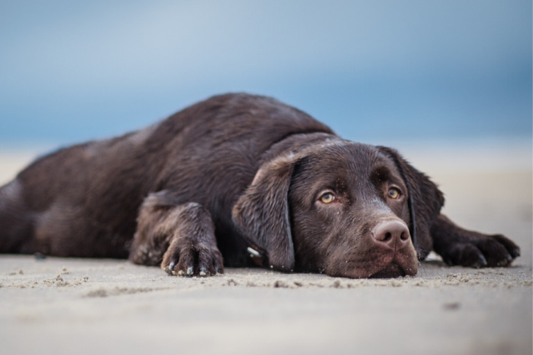 Common Pet Cancer Symptoms to Watch Out For